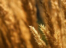 Полевая трава в ЖК Суворовском