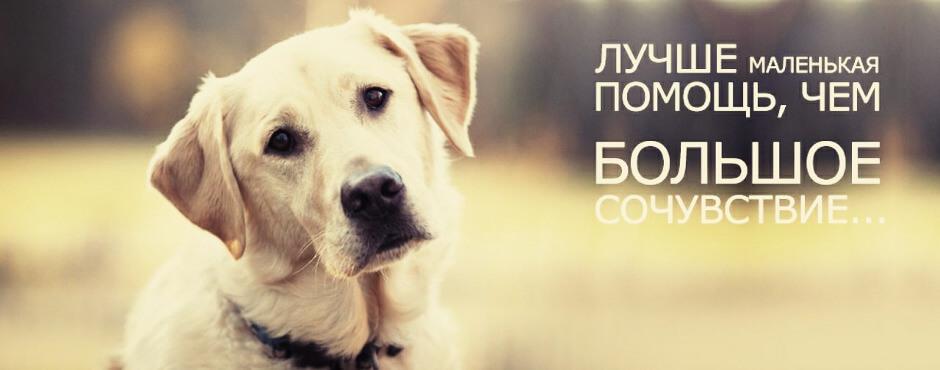 Помощь животным Суворовского