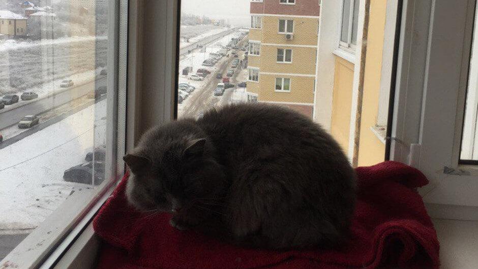 Теплый кот в ЖК Суворовском