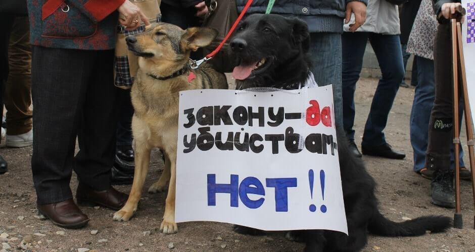 Бездомные собаки ЖК Суворовского