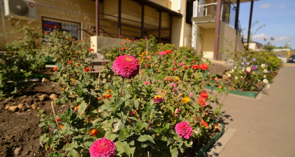 Цветы в ЖК Суворовский