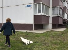 Проверка обработки от клещей в ЖК Суворовский